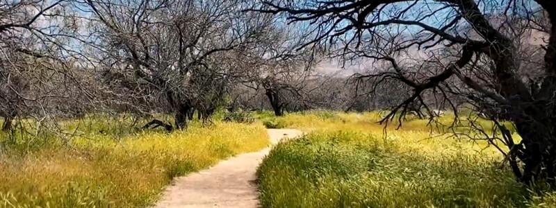 Canyon Loop Trail - Catalina State Park Arizona
