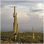 Photo of Tucson Area and Southern Arizona